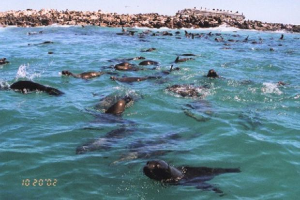 10 Fun Facts about the Marine Big 5 | Grootbos #MarineBig5 #seals #capefurseal http://www.grootbos.com/en/blog/marine-life/10-fun-facts-about-the-marine-big-5