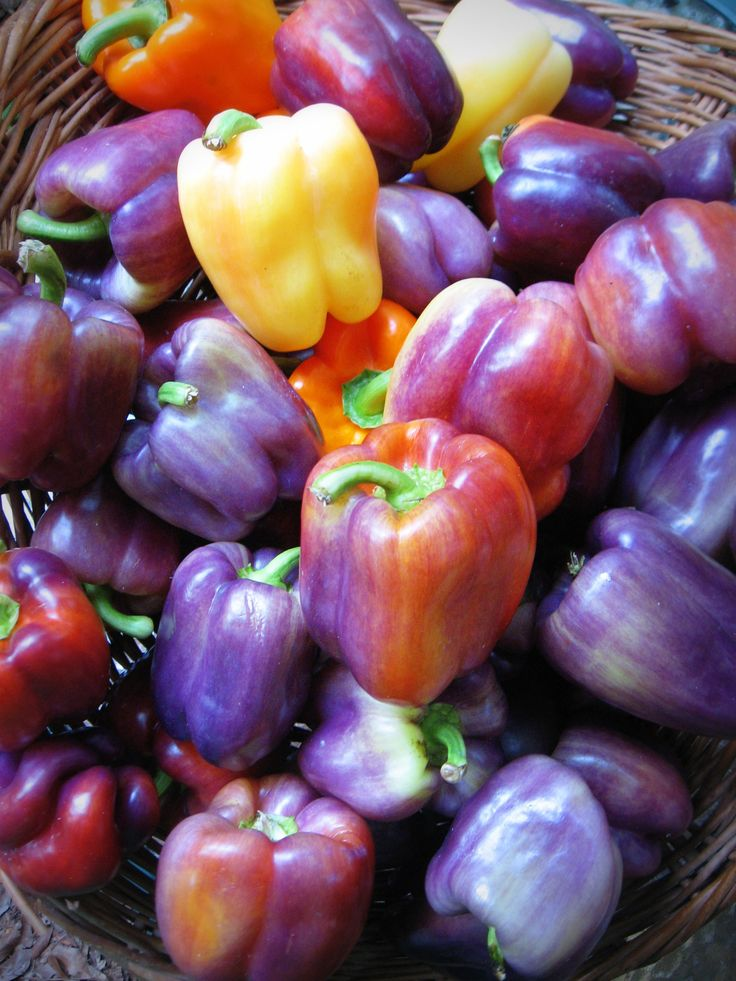 Heirloom sweet bell peppers. www.bluebirdcsa.com Save the seeds from your heirloom bell peppers-dry and save in paper envelope with name on it for your garden.