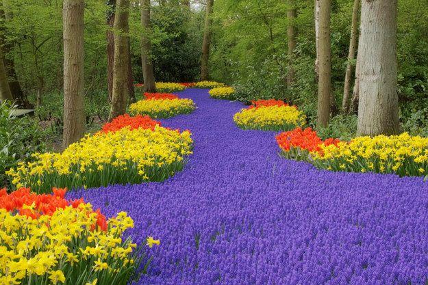 346 best nederland lisse keukenhof images on pinterest - Places to eat near longwood gardens ...