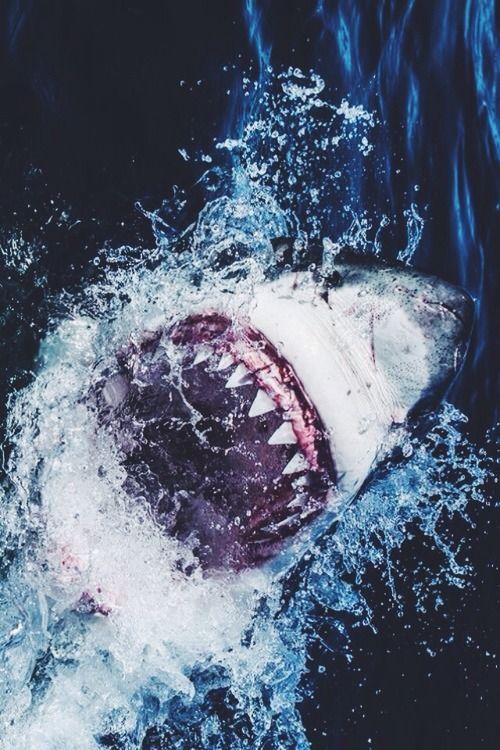 White Shark Bite   by: { Morne Hardenberg }