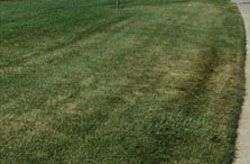 Think it's time to fertilize your lawn? Think again.