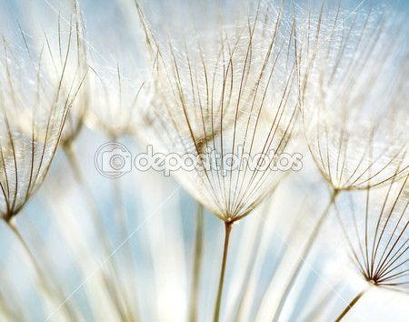 Абстрактный цветочный фон одуванчика — стоковое изображение #5832653