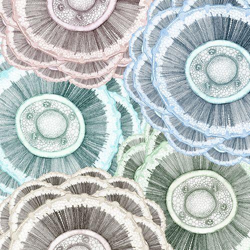 motif floral, dessin structure végétale - Florence Gendre