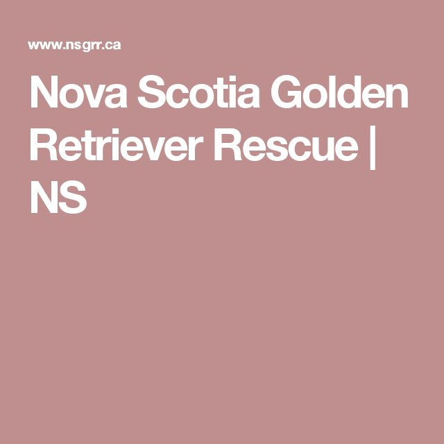 Nova Scotia Golden Retriever Rescue | NS