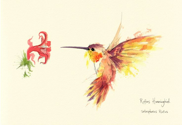 HUMMINGBIRD art - Google Search