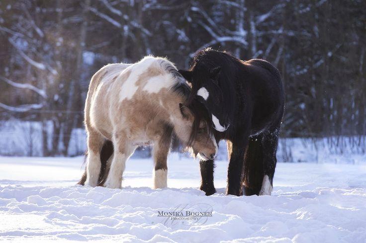 Konie w naturze - Monika Bogner fotografii - fotografia koni i psów fotografia w Bawarii