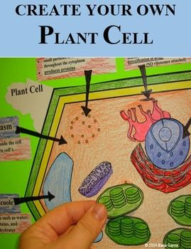Students will create their own plant cell. This activity is AWESOME to include in a science interactive notebook. MOST OF THIS IS EDITABLE, except the pictures, in case you want to add or delete an organelle, or modify a cell's function (change the wording to make it simpler or more complex, or add more detail) depending on your grade level.