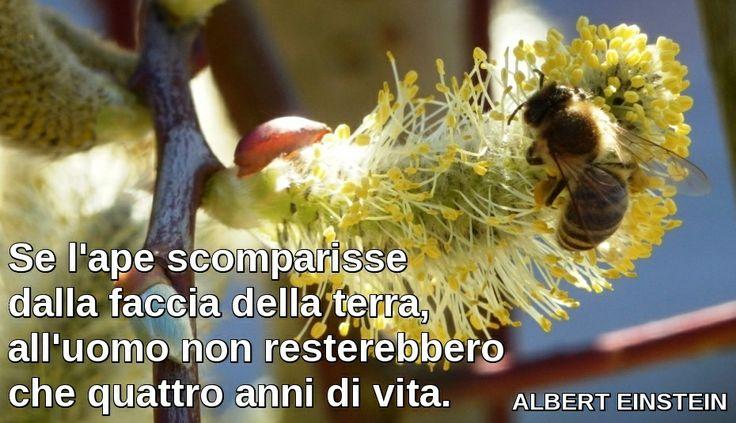 """ALBERT EINSTEIN / """"Se l'ape scomparisse dalla faccia della terra, all'uomo non resterebbero che quattro anni di vita."""""""