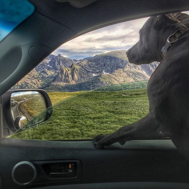 The drive through Rocky Mountain National Park was no less than amazing. Bobby thought so too! #sometimesiwander #colorado #travel #brysoncityoutdoors #roadtrip