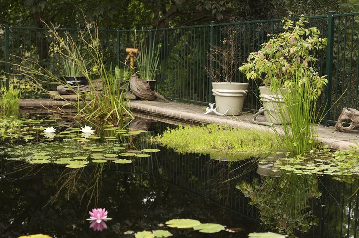 images of pool ponds | Pool to Pond – converting backyard swimming pools to ponds for ...
