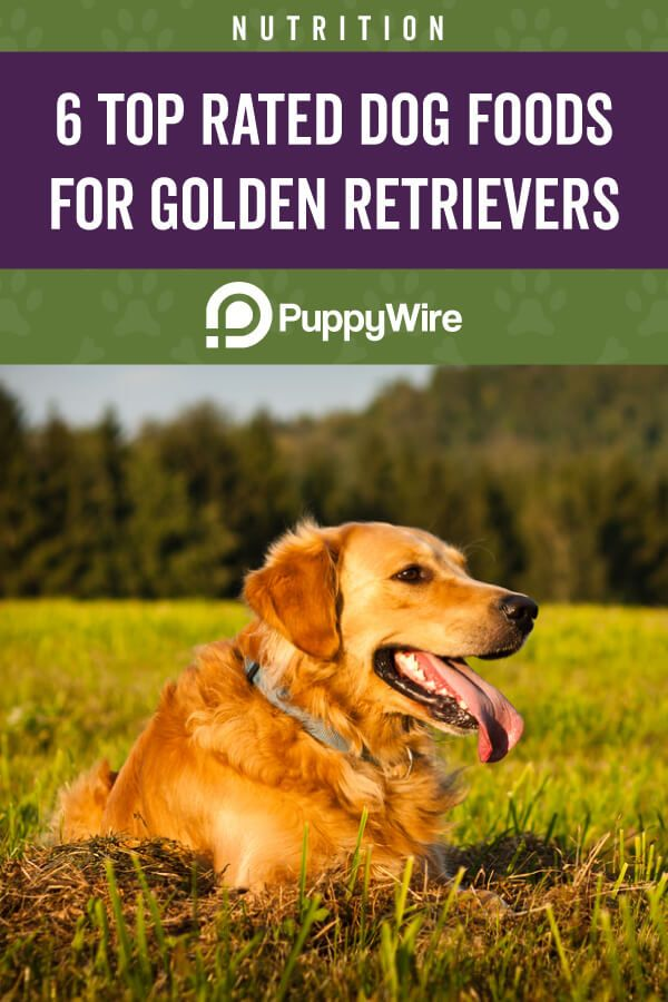 Best Rated Dog Food >> Best Dog Food For Golden Retrievers Top 6 Picks W Reviews