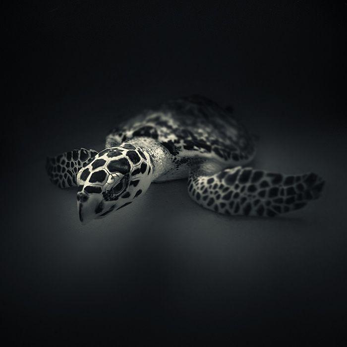 turtle2.jpg (700×700)