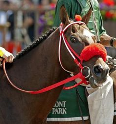 Giant Ryan, champion New York-bred, euthanized from his injuries in the True North Handicap Belmont Stakes day. He won over 600,000 dollars. | Daily Racing Form
