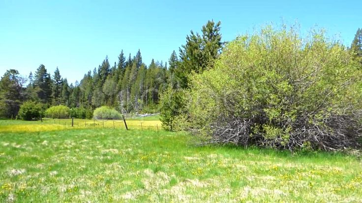Grassy Spring Meadow and Forest - Stock Footage | by Iam2012escapee