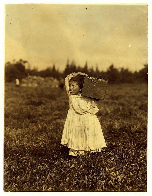 Lewis Hine: Jennie Camillo, 8 years, cranberry picker, Pemberton, New Jersey, 1910