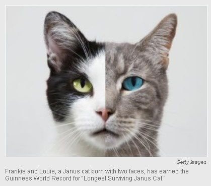 odd world records cat named frankie and louie has earned an odd guinness world record