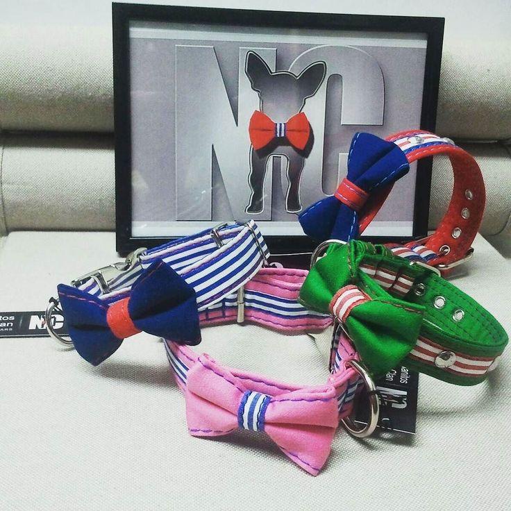 Foto de familia.  #gatos #perros #dogs #collar #cats #kitten #pajarita #pets #bowtie #tailormade #trend #fashion #customizable #nautic