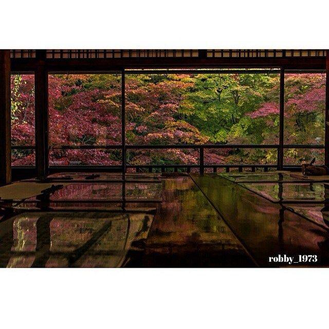 【RETRIP×瑠璃光院】  少し気が早いですが、秋を感じさせる紅葉の名所をご紹介します! こちらは京都の瑠璃光院の紅葉の写真です。 瑠璃光院は左京区上高野東山にあるお寺で、ひっそりとたたずむ数寄屋造りの建物と庭が美しいと評判です。特に秋の紅葉が見事だと京都の隠れた紅葉スポットとして密かに人気を集めていました。 瑠璃光院は残念なことに現在は一般公開がされていません。 しかし昨年は紅葉のシーズンに2週間のみ公開が再開されました。 今年ももしかしたら昨年同様に特別拝観が行われるかもしれませんね 本当に美しい紅葉が今年も見られるかも!  こちらの素敵なお写真は @robby_1973 さんからご紹介させていただきました。ありがとうございます! #RETRIP #retrip_news #RETRIP国内 #旅 #旅行 #国内旅行 #日本#京都 #瑠璃光院 #紅葉 #期間限定 #beautifuljapan #kyoto