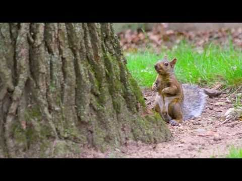 ▶ Beloit College squirrels speak - YouTube  Squirrels!