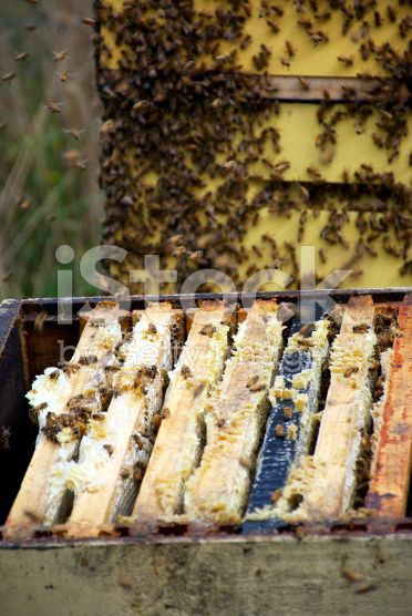 Honey Frames in a Beehive royalty-free stock photo
