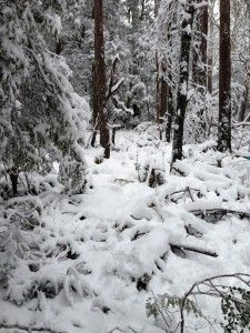 Snow on Mt Donna Buang - Warburton