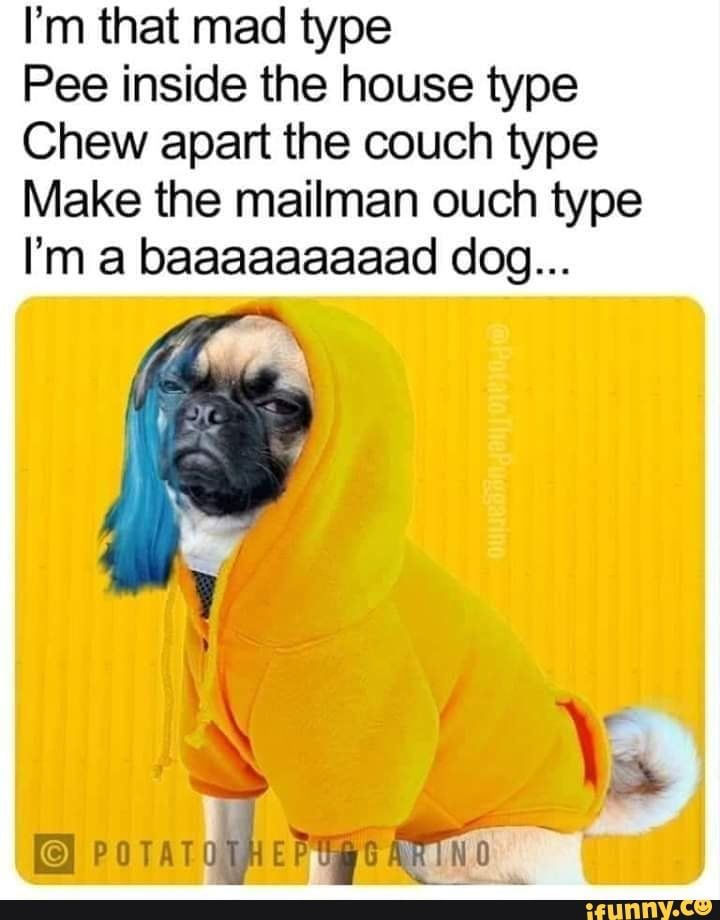 I M That Mad Type Pee Inside The House Type Chew Apart The Couch