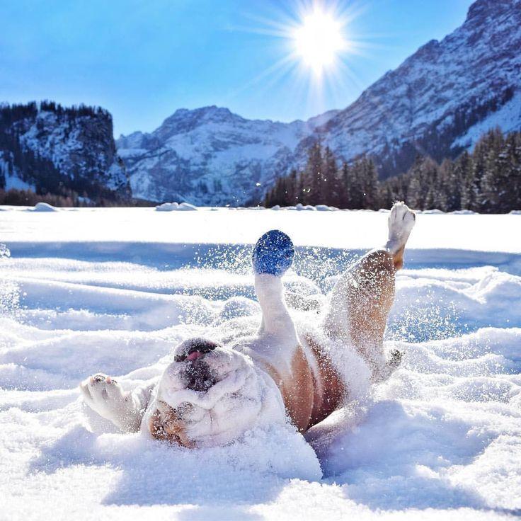 картинки с приколом доброе утро мороз тщательно