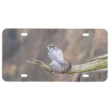 Peregrine Falcon at the Palisades Interstate Park License Plate - diy cyo personalize design idea new special