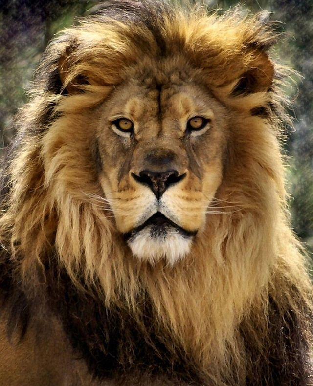 KING   Photo by ©Linda Mishler #WildlifeOwners
