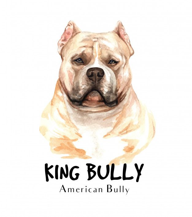 American Bully Dog Watercolor For Printing American Bully