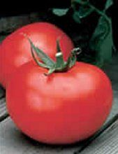 Better Boy Tomato. One of the most popular hybrid tomato varieties.  Learn all about types of tomatoes and how to classify them at http://www.tomatodirt.com/tomato-varieties.html.