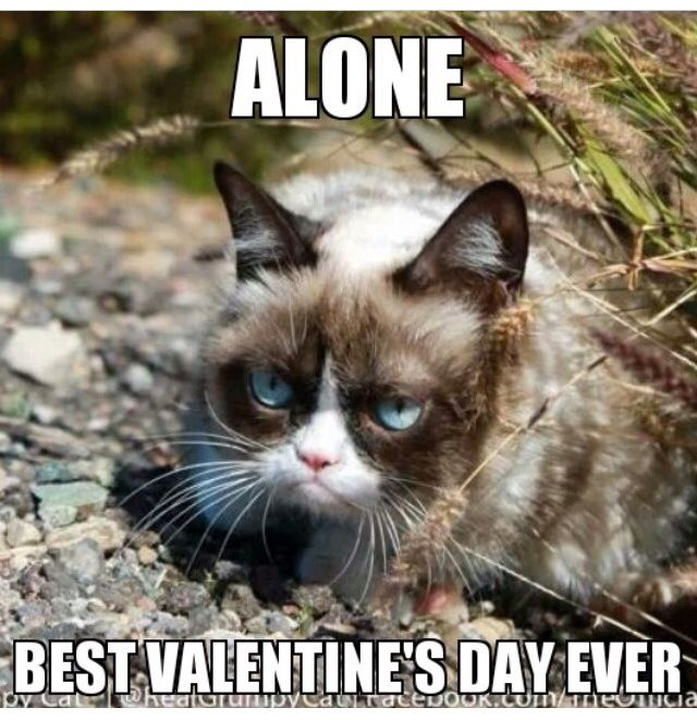 Alone Best Valentine S Day Ever Grumpy Cat Pinterest Grumpy