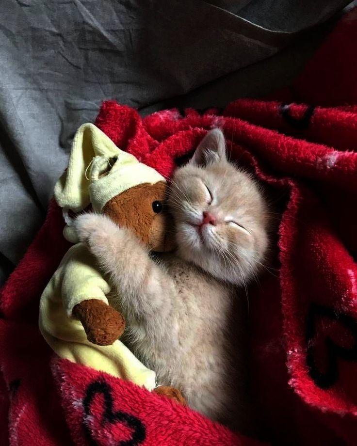 Картинки сладких снов моя любимая зайка