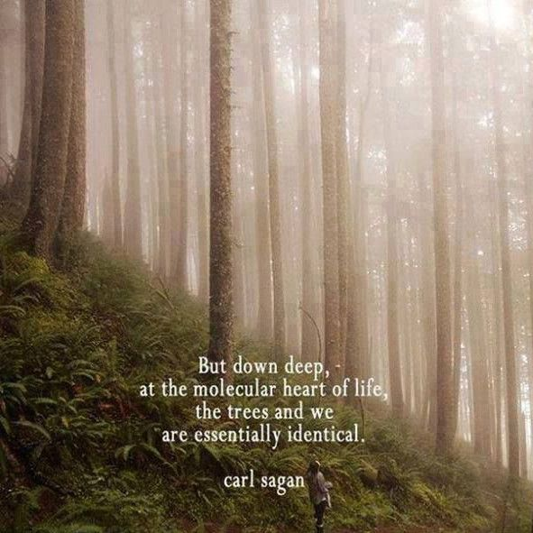But deep down, at the molecular heart of life, the trees and we are essentially identical. Carl Sagan