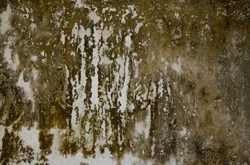 Mold in the old wall close up
