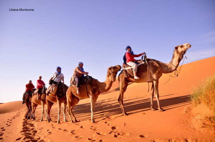 camel trek on the desert.