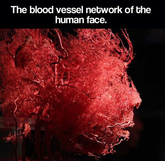 The blood vessel network… so neat!