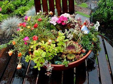 How to make a Tabletop Succulent Garden