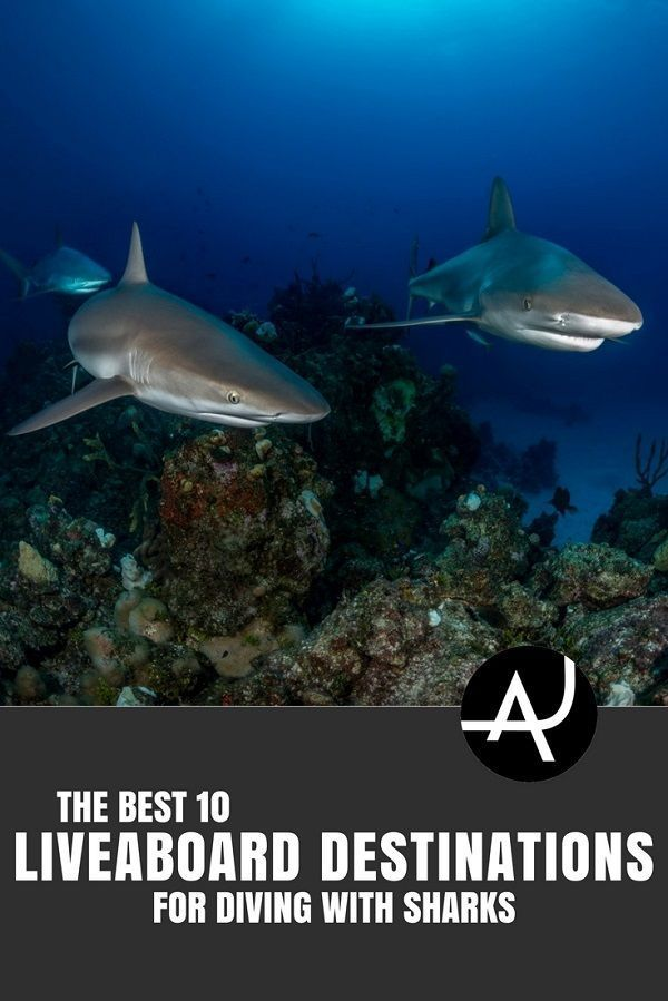 Best Liveaboard Destinations for Diving with Sharks - Best Scuba Diving Destinations - Diving Bucket List - Adventure Vacations - Beautiful Locations and Places to Dive via @theadventurejunkies #scubadivingdestinations