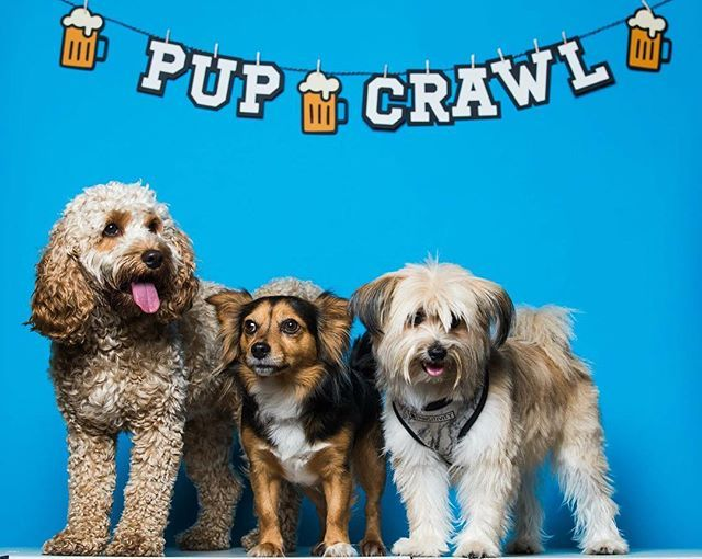 Yes Treat Your Pooch To Thier Very Own Pup Crawl In Glasgow Tickets Are Limited And Set To Sell Fast Get Your Tickets Via T Dog Travel Dogs Dog Friends