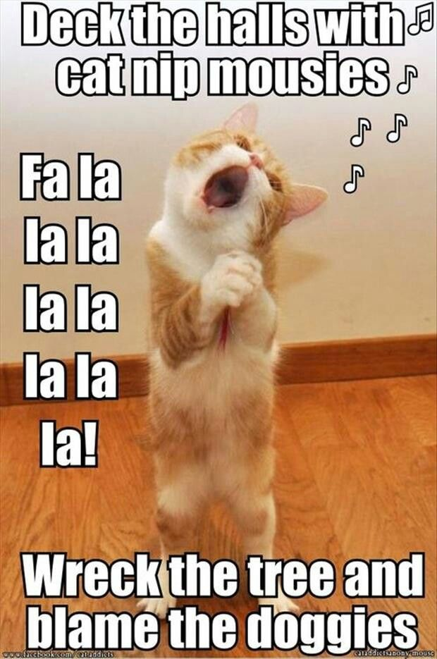Deck the halls with cat nip mousies fa la la la la la la la la wreck the tree and blame the doggies