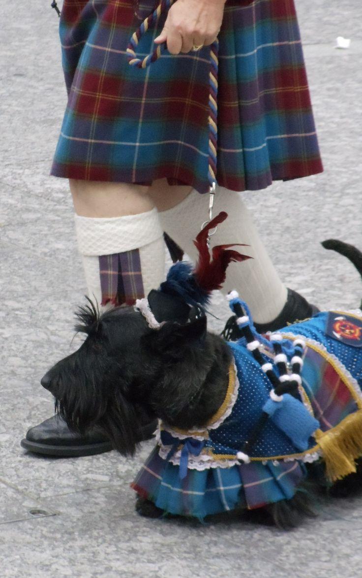 doggie dandy! #tartan #dog #plaid #pattern