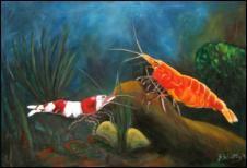 Suesswassergarnelen, Wirbellose Tiere, Oelgemaelde handgemalt auf Leinwand, 40 cm x 60 cm.