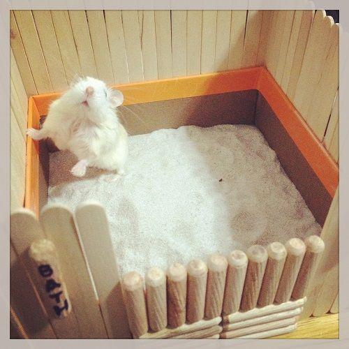 diy hamster bath house