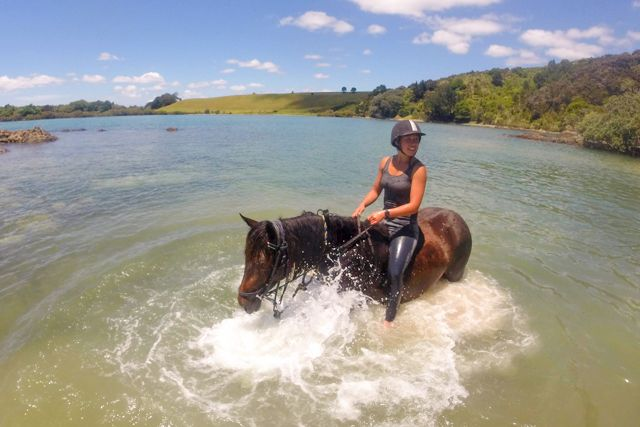 Only 5km from Paihia in the Bay of Islands, Horse Trek'N is situated in one of the most beautiful parts of New Zealand. We have something for all riders, from the total beginner to the more experienced. Discover New Zealand's scenery on horse back on a 1 or 2 hour ride. We have an awesome team of horses, and each one is full of personality!