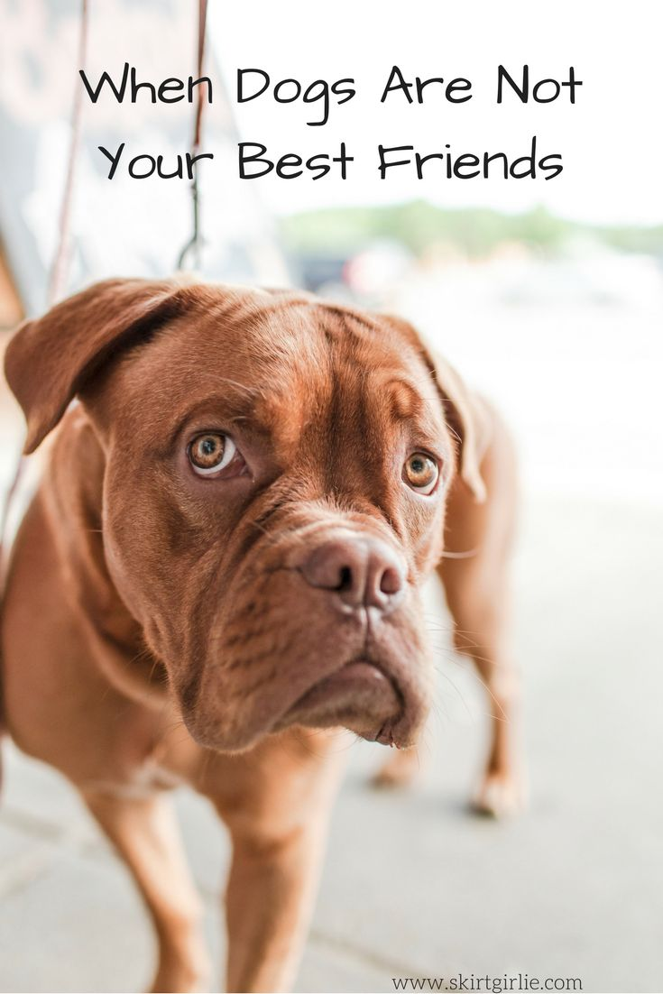 When Dogs Are Not Your Best Friends - Skirt Girlie