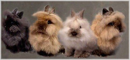 Lion head rabbits are a special breed of bunny rabbits that have extra fur around their head that resemble the mane of a lion. They are cute, gentle and furry animals and make wonderful pets.