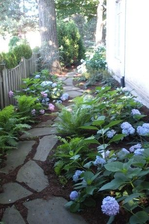 Traditional Landscape/Yard With Hydrangea, Fence, Western Sword Fern, Natural  Stone Pathway