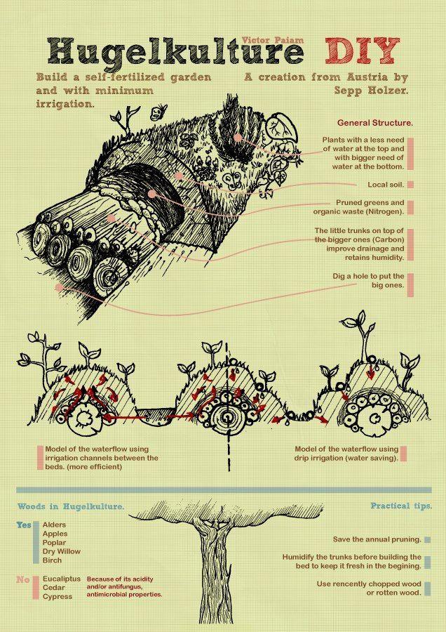 Build a self fertilized Garden with Minimum Irrigation #livingecology #permacultureinternship