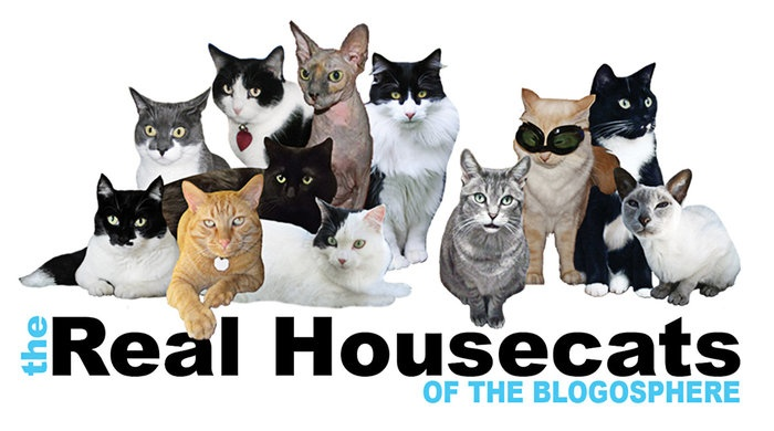 "REAL HOUSECATS – Deborah Glovatsky created a video spoof of the popular cable show ""Real Housewives,"" featuring her cat Katie and Weehawken cat Cathy Keisha."